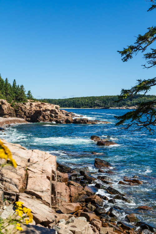 Evergreen trees along rocky coast of Maine with dark blue sea Acadia National Park