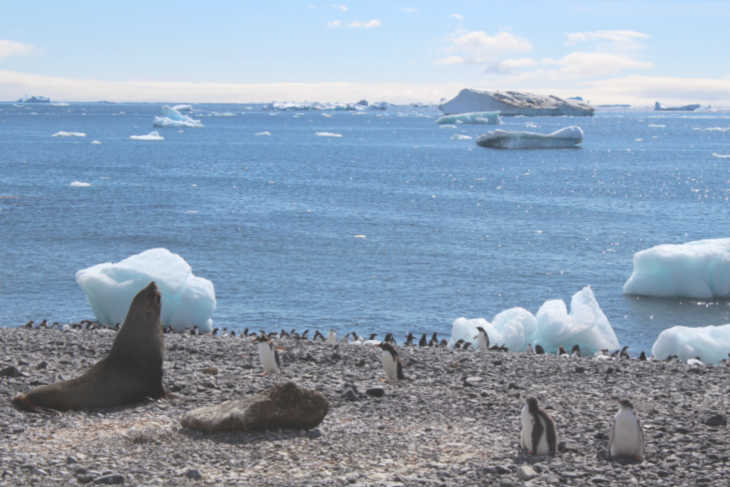 Family Vacation to Antarctica-Multigenerational Vacations