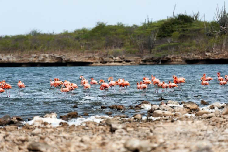 Salina Slagbaai Bonaire-Multigenerational Vacations