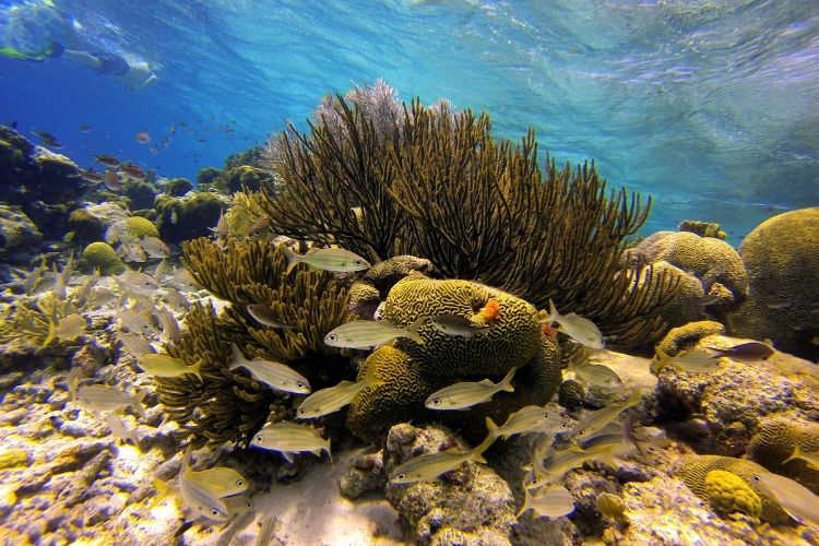 Snorkel in Bonaire-Multigenerational Vacations