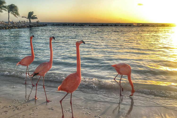 Aruba flamingos-Multigenerational Vacations