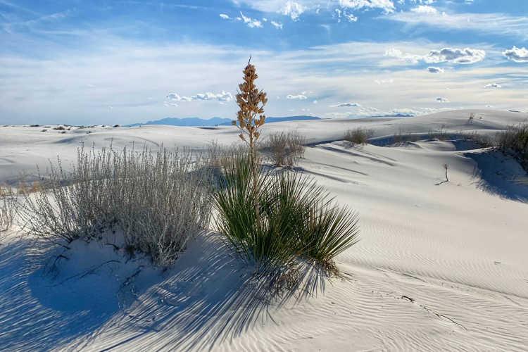 White Sands-Kirsten Maxwell